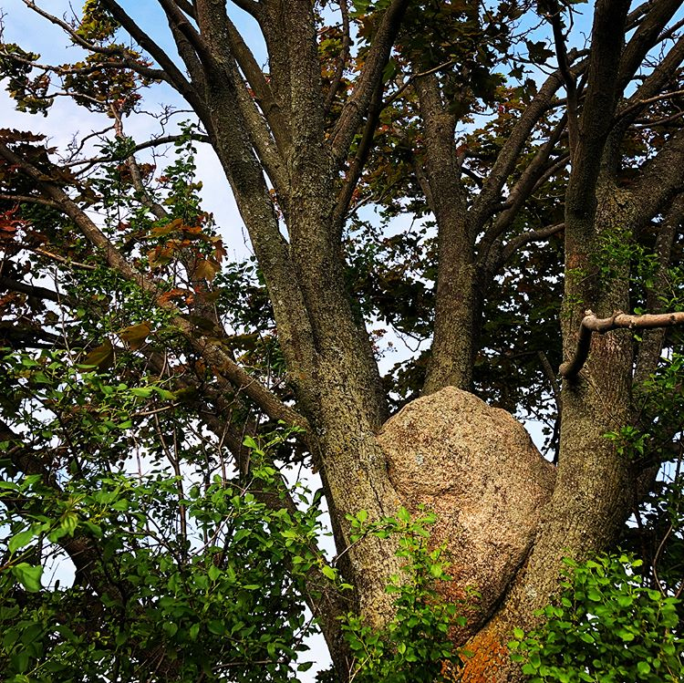 port-hope-rock-in-tree